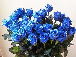 các loại hoa hồng - hồng xanh