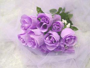 các loại hoa hồng - hoa hồng tím