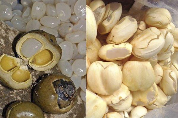 Phân biệt hạt đác và hạt thốt nốt
